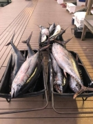 Fishing charters_16